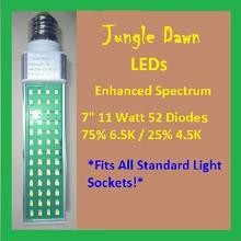 Jungle | Dawn | 7 | Inch | 11 | Watt