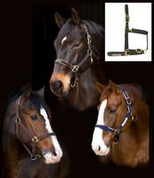 Rambo Newmarket Witney Stripe Padded Halter, Pony & Cob