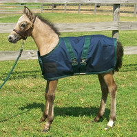"Newborn Pony Foal Turnout Blanket, 27"" - 36"""
