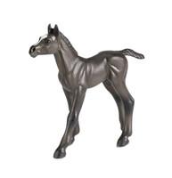 Safari Winner's Circle Arabian Foal