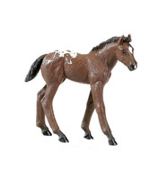 Safari Winner's Circle Appaloosa Foal