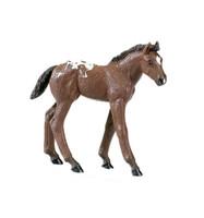 Safari Winner's Circle Appaloosa Foal