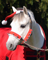 Holiday Horse Wear, Halter Set with Bells