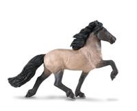Safari Winner's Circle Icelandic Stallion