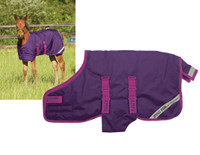 "Amigo Foal / Mini Turnout Blanket, Berry/Fuschia, 30"" - 60"""