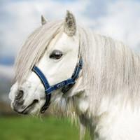 Horseware Amigo Petite Mini Halter