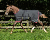 "Amigo Foal / Mini Turnout Blanket,Excalibur/Purple/Yellow,  30"" - 60"""