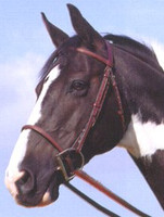 Ainsley Classic Plain Raised Bridle, Size Cob Only