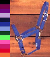 Hamilton Nylon Halter, Small Pony to Cob Sizes