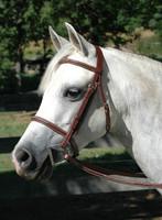 Abbey Raised, Fancy Stitched Bridle, Pony & Cob