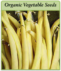 organic-vegetable-seeds-logo.png