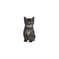 Duke The Tiger Kitten Die-Cut Photographic Magnet