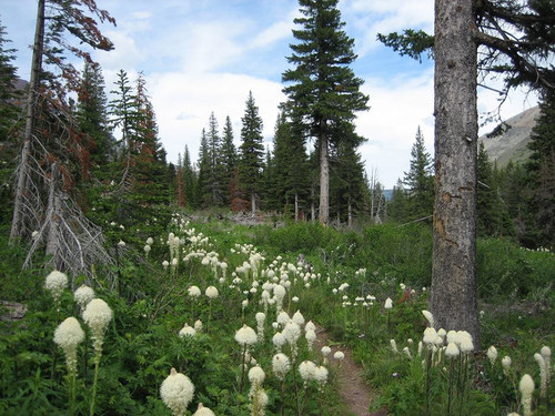 Bear Grass Flower Essence