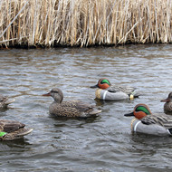 Doa Refuge Series Greenwing Teal 6 Pack
