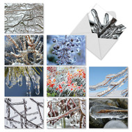 Frozen winterscapes show ice-encased branches and leaves during the holiday season's cold side.