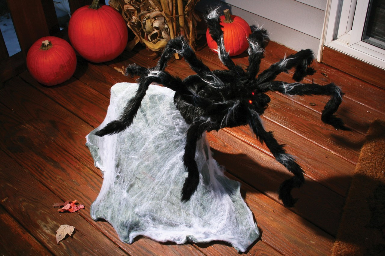 36 giant jumping spider
