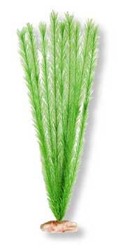 Blue Ribbon Plant Soft Foxtail Lg Emgr-87352 {bin-1}