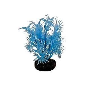 Blue Ribbon Neon Prpl Drgn Leaf Plnt {bin-1}