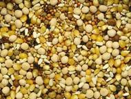 Higg Sprm 15% Popcorn 50 lb
