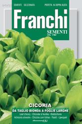 CHICORY (Cicoria) da taglio bionda foglie larghe