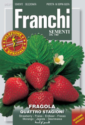 STRAWBERRY (Fragola) quattro stagioni