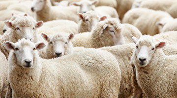 yarn-wool.jpg
