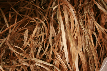 Raw Hemp Bark Fiber