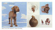 William Wegman - More Puppies