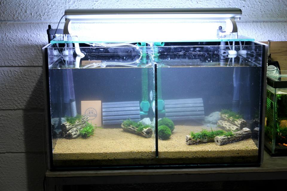 Setting Up A Caridina Taiwan Bee Crystal Shrimps Tank