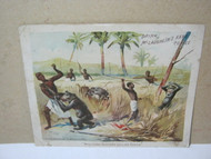 McLaughlin's Coffee 1890's Adv Card Manyuema Hunters