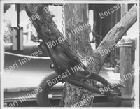 http://images.borsariimages.com/AA-9923-PB/WMP/P-ABW-743-PB_F.JPG?r=1