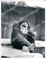 http://images.borsariimages.com/AA-0378-PB/WMP/P-AAC-775-PB_F.JPG?r=1