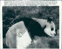 http://images.mmgarchives.com/CT/AF/AFZ/AFZ-472-CT_F.JPG