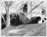 http://images.borsariimages.com/AA-9923-PB/WMP/P-ABW-739-PB_F.JPG?r=1