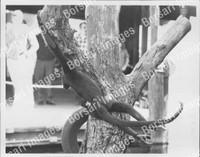 http://images.borsariimages.com/AA-9923-PB/WMP/P-ABW-738-PB_F.JPG?r=1