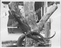 http://images.borsariimages.com/AA-9923-PB/WMP/P-ABW-744-PB_F.JPG?r=1