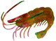 Shrimp 1 Small Size Two Dimensional Metal Fish Wall Art