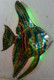 Example of LED lit Small Size Two Dimensional Metal Fish Wall Art