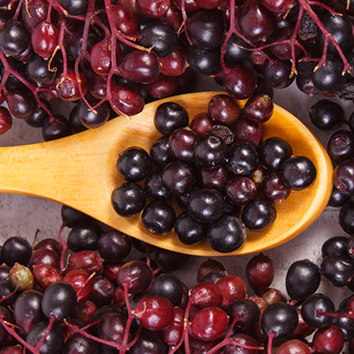 Elderberry & Immune Support