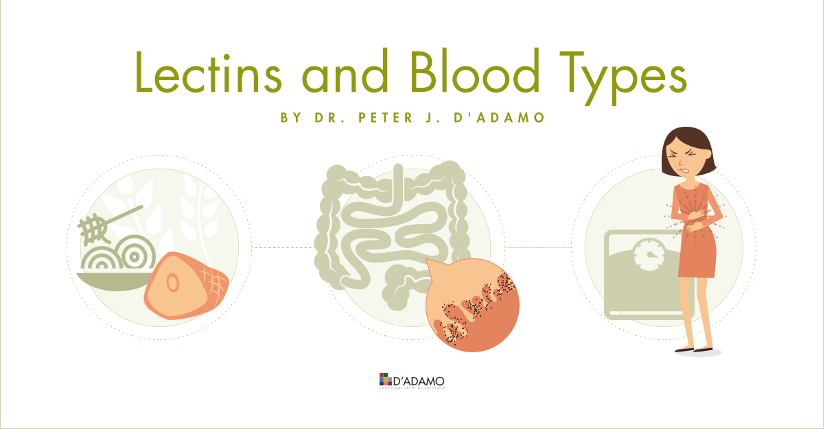 Lectins & Blood Types