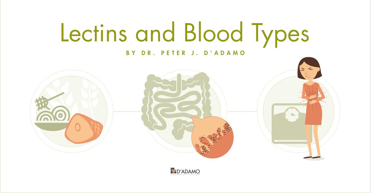 Lectins & Blood Types
