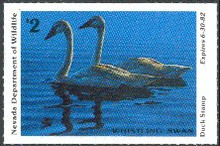 Nevada Duck Stamp 1981 Whistling Swans