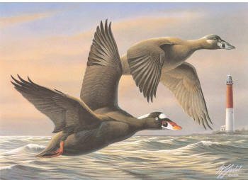 US Federal Duck Stamp Print RW63 (1996-1997)