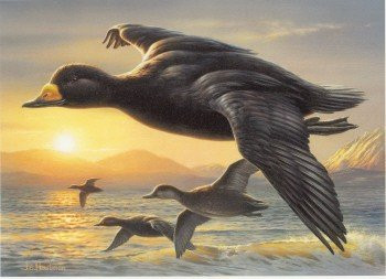 US Federal Duck Stamp Print RW69 (2002-2003)