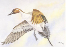 Mexico Duck Stamp Print 1994 Pintail by Antonio Rovira
