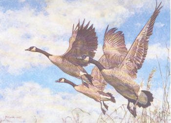 Canada Duck Stamp Print 1987 Canada Geese by George McLean Medallion Edition