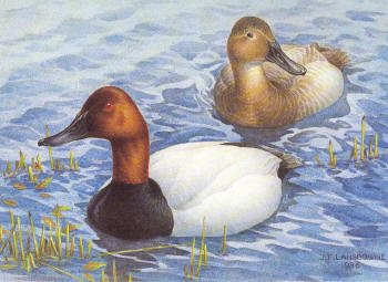 Canada Duck Stamp Print 1986 Canvasbacks by J. F. Landsdowne Medallion Edition