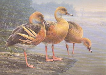 Australia Duck Stamp Print 1989 Plumed Whistling Duck by Daniel Smith Medalion Editition