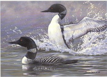 Ducks Unlimited Duck Stamp Print 1988 Loons by Seerly Lester Executive Edition , Hand Colored Etching