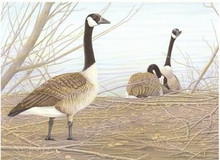 Wyoming Stamp Print 1985 Canada Geese by Robert Kusserow Medalion